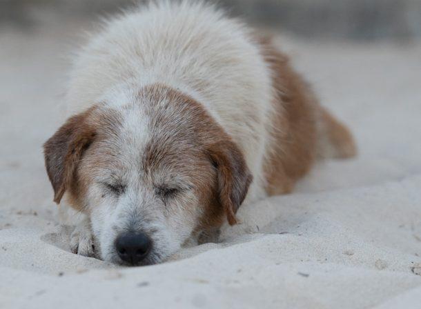 dog sleeping at beach